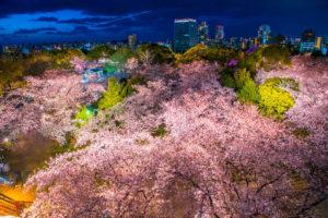舞鶴公園の画像